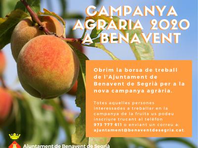 Vols treballar en la campanya agrària a Benavent?